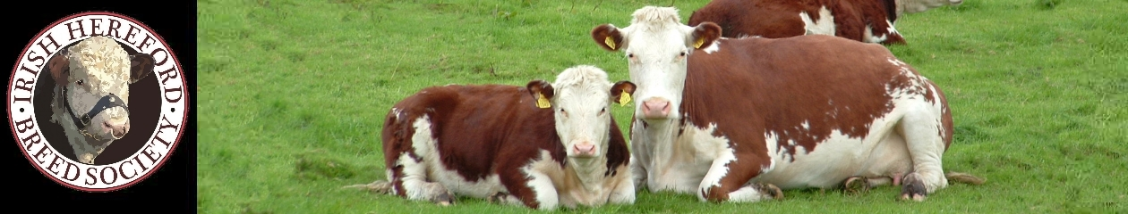 Irish Hereford Breed Society Ltd