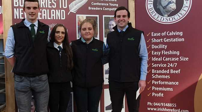 Irish Young Handlers working hard at the Premier Autumn Show & Sale 2019