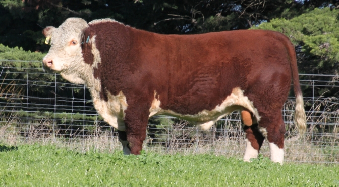 New Breed Improvement Scheme bull – Pute Nascar N13