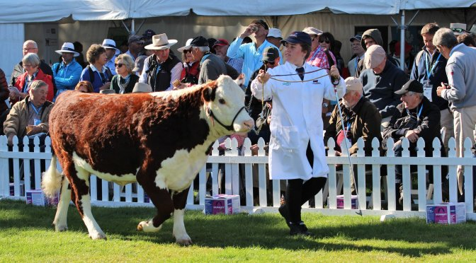 Katie Brady, shares an insight into the World Hereford Conference 2020 in NZ.