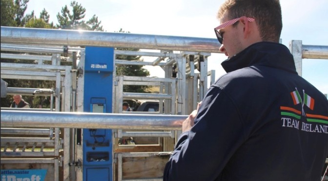 Eoin Lynch, shares an insight into breeding Herefords in New Zealand.